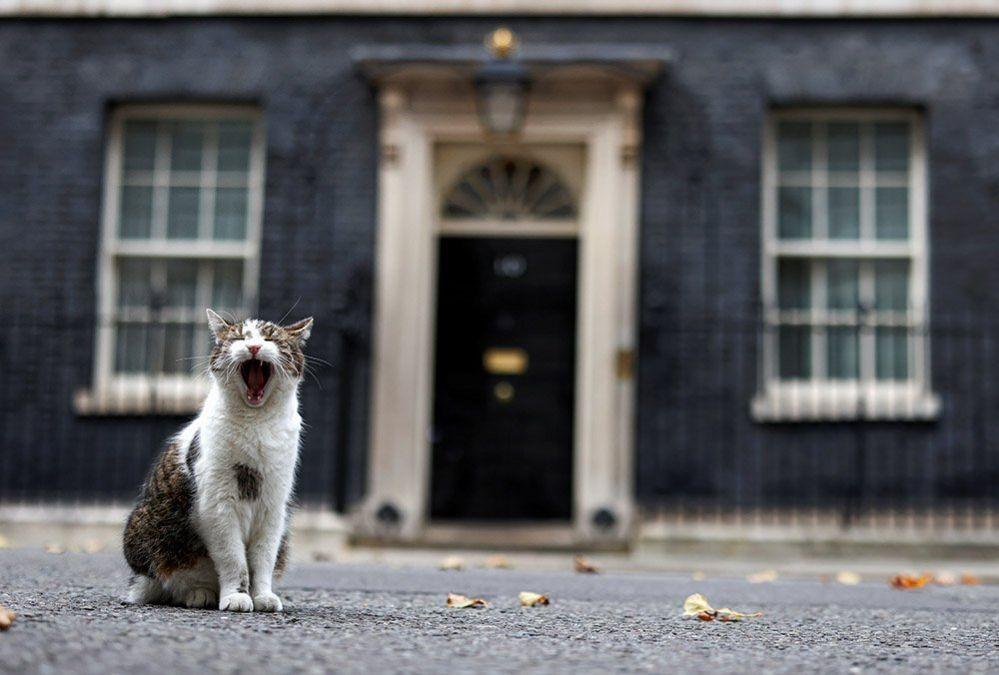 Larry the cat outside his home in Downing Street