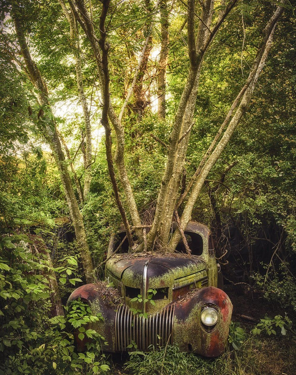 An abandoned car with a tree growing out of the bonnet