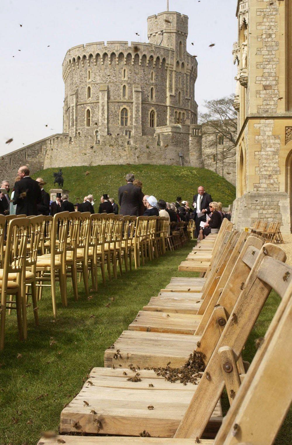 Bees at Windsor Castle