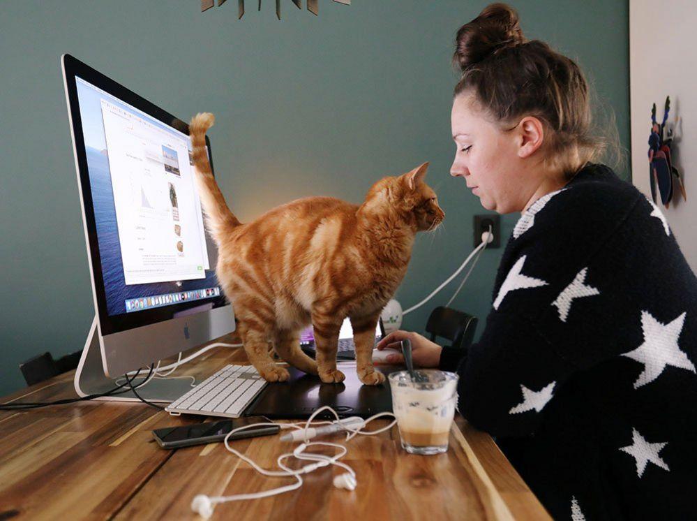 A woman's cat walks across her desk