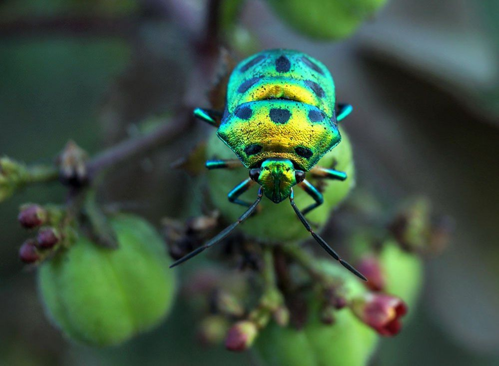 Metallic insect