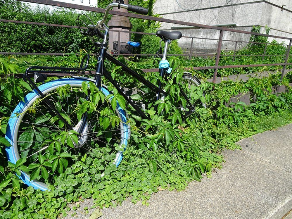 Bike covered in plants