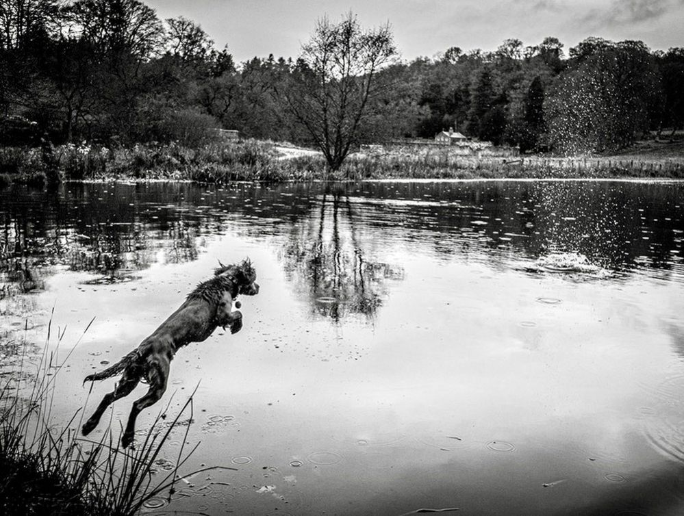 A dog jumping into water