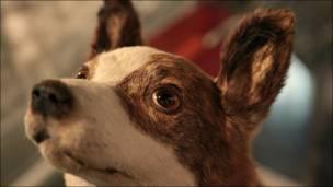 Чучело собаки Белки в музее космонавтики. Фото Игоря Подгорного