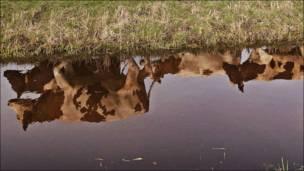 """Vacas """"orgánicas"""""""