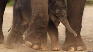 Elefantes de el zoológico Taronga, Australia