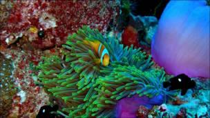 Bajo el mar, en el Archipiélago de Chagos. Foto: Alasdair Harris/Blue Ventures Conservation