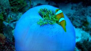 Bajo el mar del Archipiélado de Chagos. Foto: Alasdair Harris/Blue Ventures Conservation