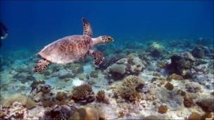 Bajo el mar en el Archipiélago de Chagos.  Foto: Anne & Charles Sheppard