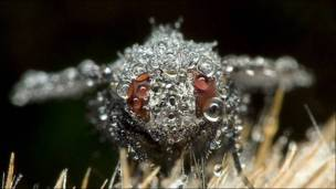 Mosca común cubierta de rocío