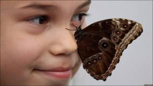"""Exposición """"Exploradores de Mariposas"""" en el Museo de Historia Natural de Londres"""