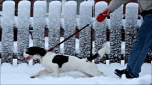 Mollie y su amo en la nieve en Escocia