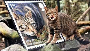 Gato silvestre en Escocia