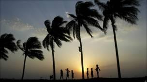 Wani yaro yana hawan bishiya a garin Bhubaneshwar na kasar India, yayinda abokansa ke kallo.