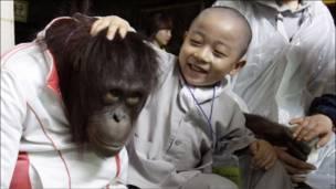 Юный монах гладит по голове орангутанга
