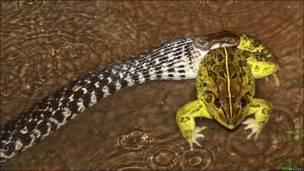 Serpiente tragándose una rana
