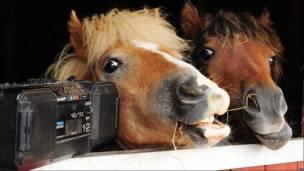 Ponies escuchan música