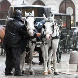 Coche de caballos en Austria