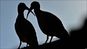 A vista de pájaro