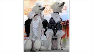 """""""عروس و داماد"""" در جشن نمایش حیوانات خانگی در تایپه"""
