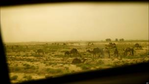 Camellos vistos desde la ventana de un vehículo militar