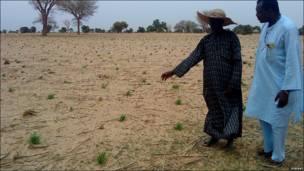 Hotuna: Salon noman da ya gagari fari a Nijar