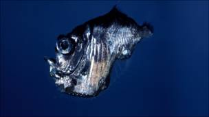 Criaturas de las profundidades de la Gran Barrera de Coral