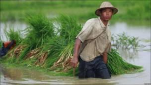 Бурмийский фермер