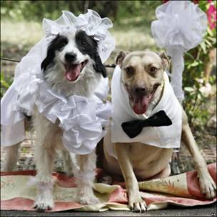 Un casamiento canino
