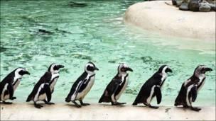 Пингвины в лондонском зоопарке
