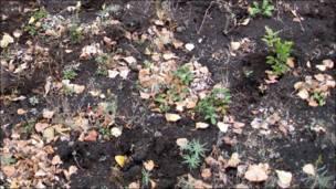 Болотная растительность