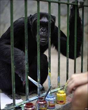 Jimmy, un chimpancé de 26 años, pinta en su jaula del zoológico de Niteroi, Brasil