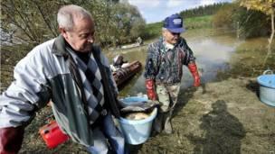 Добровольцы вытаскивают погибшую рыбу из реки, в которую попали токсичные доходы в Венгрии