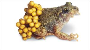 """Crédito: Dorling Kindersley (DK) Books, """"The Natural History Book: The Ultimate Visual Guide to Everything on Earth"""""""