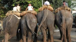 elefantes en India