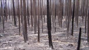 Tras un incendio forestal. Foto: Peter Kolb