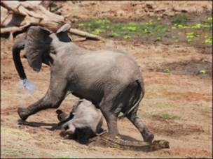 हाथी और मगरमच्छ