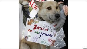 Акция протеста против уничтожения бродячих собак в Красноярске