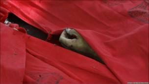 تصویری از یک کشته ناآرامی های تایلند