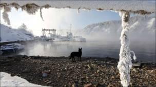 Собака в снегу у берега реки