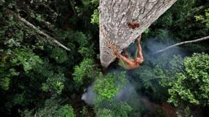 Собиратель меда на дереве