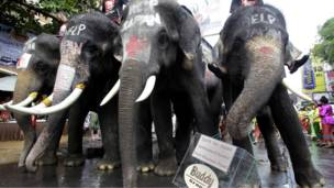 Слоны в Бангкоке