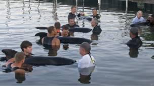 Во Флориде спасают черных дельфинов