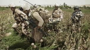Военные несут через маковое поле раненого на носилках