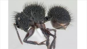 Semut dalam gambar 3D