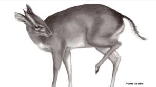 Antílope (Philantomba walteri)