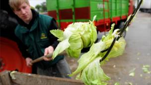 Фермер уничтожает листовой салат в Германии