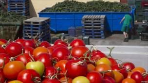 Сельскохозяйственный рабочий в Испании ходит мимо груд огурцов и помидоров