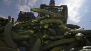 Фермер выбрасывает урожай огурцов на юго-востоке Испании