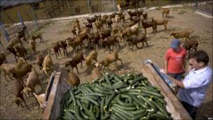 Cutar E.coli ta sa an lalata kayan lambu a Turai